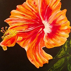 Hibiscus painted by