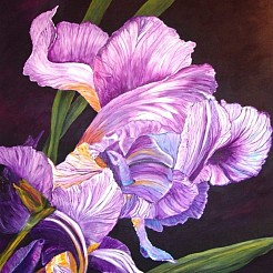 Iris painted by